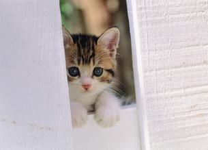 白いサクと仔ネコの写真素材 [FYI03248372]