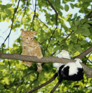 木の上の猫の写真素材 [FYI03248377]