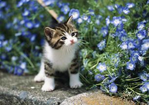 公園の花と仔ネコの写真素材 [FYI03248395]