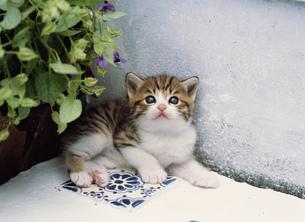 庭先の仔ネコの写真素材 [FYI03248396]
