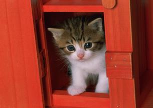 赤い箱のなかの仔ネコの写真素材 [FYI03248399]