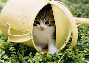 庭先の仔ネコの写真素材 [FYI03248401]