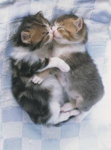 二匹の眠る子猫の写真素材 [FYI03248404]