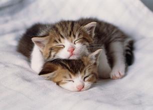 二匹の眠る仔ネコの写真素材 [FYI03248408]