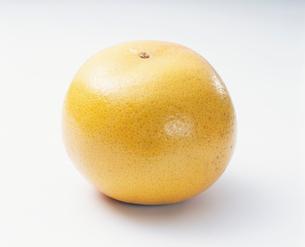 グレープフルーツ(ルビー種)アメリカ産の写真素材 [FYI03248697]