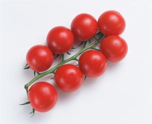 オランダトマトの写真素材 [FYI03248768]