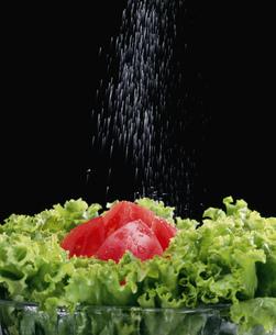 野菜サラダに塩をかけるの写真素材 [FYI03248870]