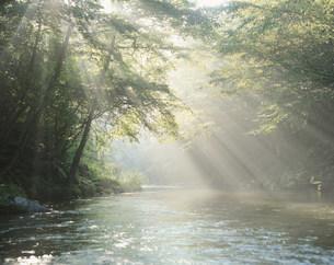 木洩れ日と渓流の写真素材 [FYI03248937]