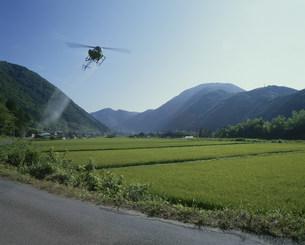 ヘリコプターによる農薬散布の写真素材 [FYI03249024]