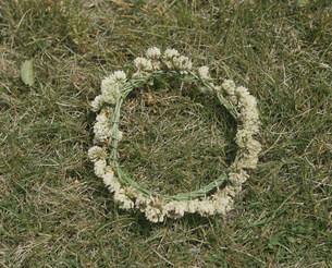 シロツメクサの花輪の写真素材 [FYI03249029]