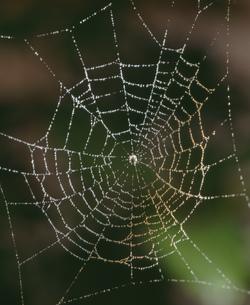 クモの巣の写真素材 [FYI03249033]