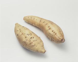 サツマイモ(黄金せんがん)の写真素材 [FYI03249056]