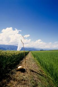 青空と麦わら帽子の写真素材 [FYI03249208]