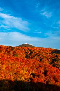 西吾妻スカイバレーより西吾妻山紅葉のブナ林の写真素材 [FYI03251903]