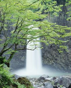新緑の苗名滝の写真素材 [FYI03253130]
