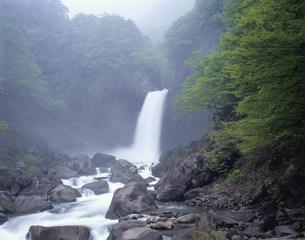 新緑の苗名滝の写真素材 [FYI03253228]