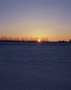 雪原の朝日の写真素材 [FYI03253605]