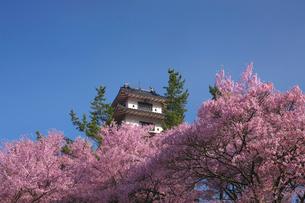 桜と青空 信州高遠美術館の写真素材 [FYI03253932]