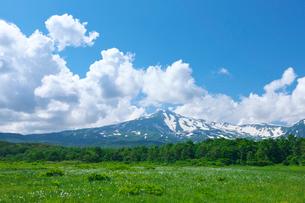 桑ノ木台湿原のワタスゲと残雪の鳥海山と青空と雲の写真素材 [FYI03254220]
