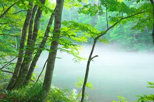 湧水の池の朝霧の写真素材 [FYI03254231]