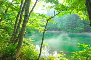 湧水の池の朝霧の写真素材 [FYI03254249]