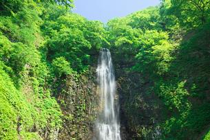 新緑の玉簾の滝の写真素材 [FYI03254317]
