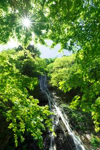 モミジの新緑と丸神の滝の写真素材 [FYI03254345]