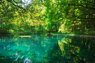 新緑の丸池の写真素材 [FYI03254356]
