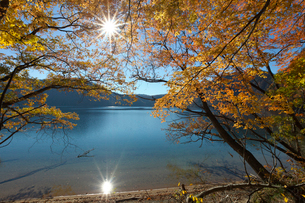 紅葉の沼沢湖と木漏れ日の写真素材 [FYI03254401]