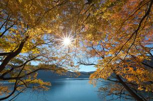 紅葉の沼沢湖と木漏れ日の写真素材 [FYI03254402]