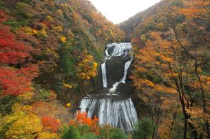 紅葉の袋田の滝の写真素材 [FYI03254409]