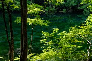 新緑の龍ヶ窪の写真素材 [FYI03254423]