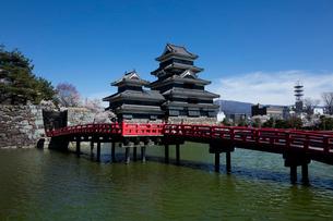 松本城と桜の写真素材 [FYI03254484]