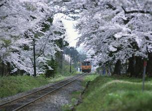 芦野公園の桜と津軽鉄道ディーゼルカーの写真素材 [FYI03254730]