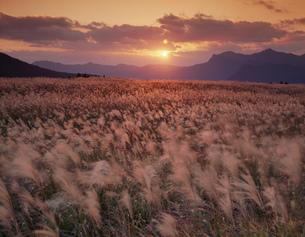 風に揺れるススキと夕陽の写真素材 [FYI03254776]