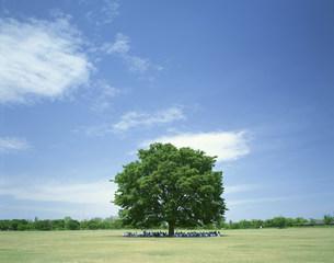 大樹に憩う人たちの写真素材 [FYI03254789]
