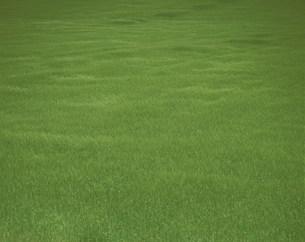 風に揺れる麦畑の写真素材 [FYI03254796]