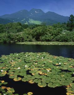 スイレン咲くイモリ池と妙高山の写真素材 [FYI03255043]
