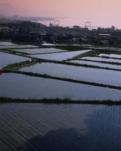 春の朝霞に棚引く琵琶湖と八屋戸の棚田の写真素材 [FYI03255121]