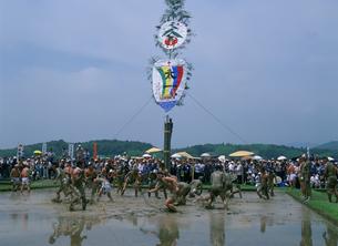 伊雑宮御田植祭の写真素材 [FYI03255239]