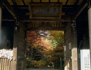 四国88ヶ所第82番礼所 紅葉の根香寺の写真素材 [FYI03255258]