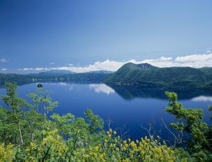 キガラシの花咲く摩周湖の写真素材 [FYI03255419]