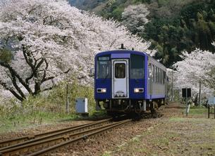 桜の中を行く列車 JR笠置駅の写真素材 [FYI03255564]
