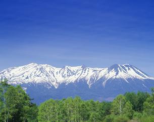 新緑の白樺林と木曽御岳の写真素材 [FYI03255591]