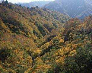 田子倉湖あいよし沢紅葉の写真素材 [FYI03255732]