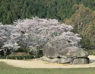 桜咲く石舞台の写真素材 [FYI03255757]