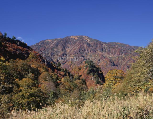 浅草岳の紅葉の写真素材 [FYI03255762]