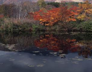 いもり池の紅葉の写真素材 [FYI03255766]