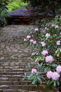 シャクナゲ咲く室生寺 鎧坂の写真素材 [FYI03255960]
