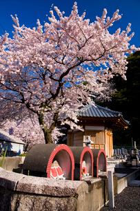 若越二番地蔵菩薩と桜の写真素材 [FYI03256108]